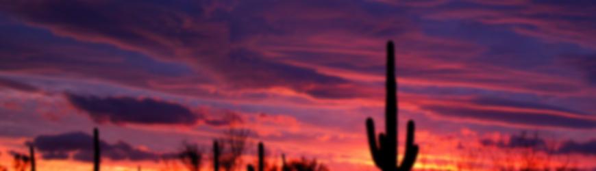 Sunset cactus1
