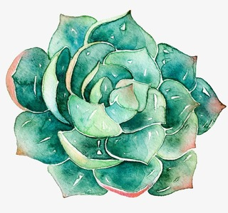 Succulent Group Logo