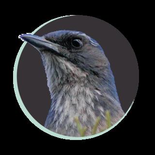 Treebird Branding Logo