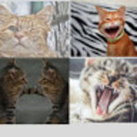 Funny Cats Videos