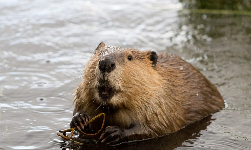 2014 Toyota North American Environmental Report – Leave It to Beaver