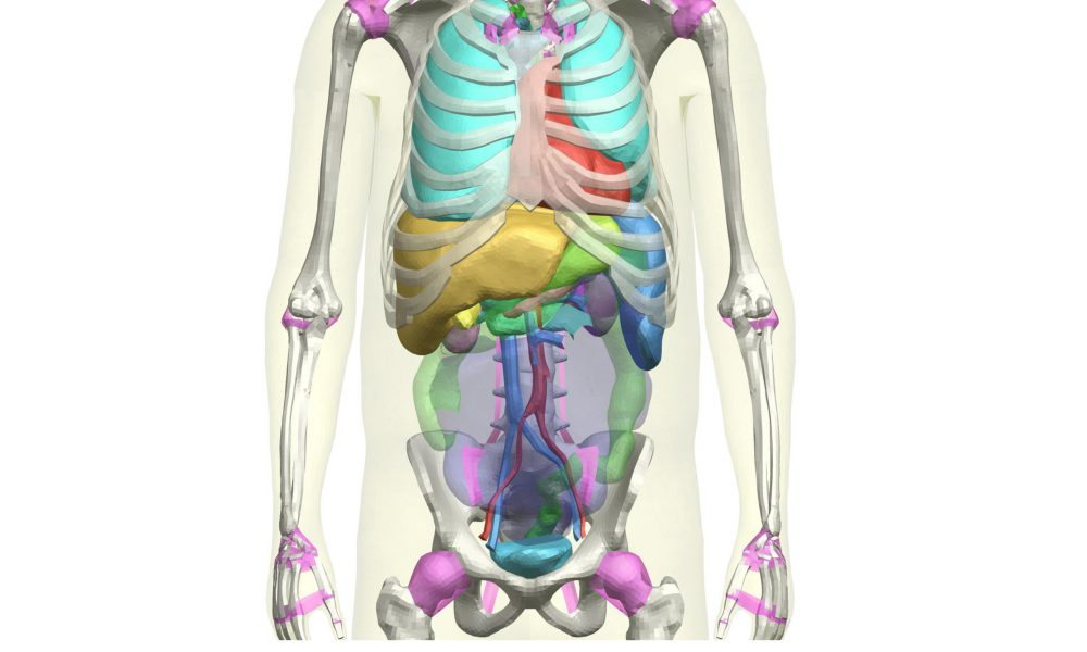THUMS Version 4 – Internal Organs of Adult Male