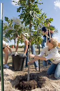 Arbor Day Foundation and Toyota Celebrate  Fifth Anniversary of Tree Campus USA