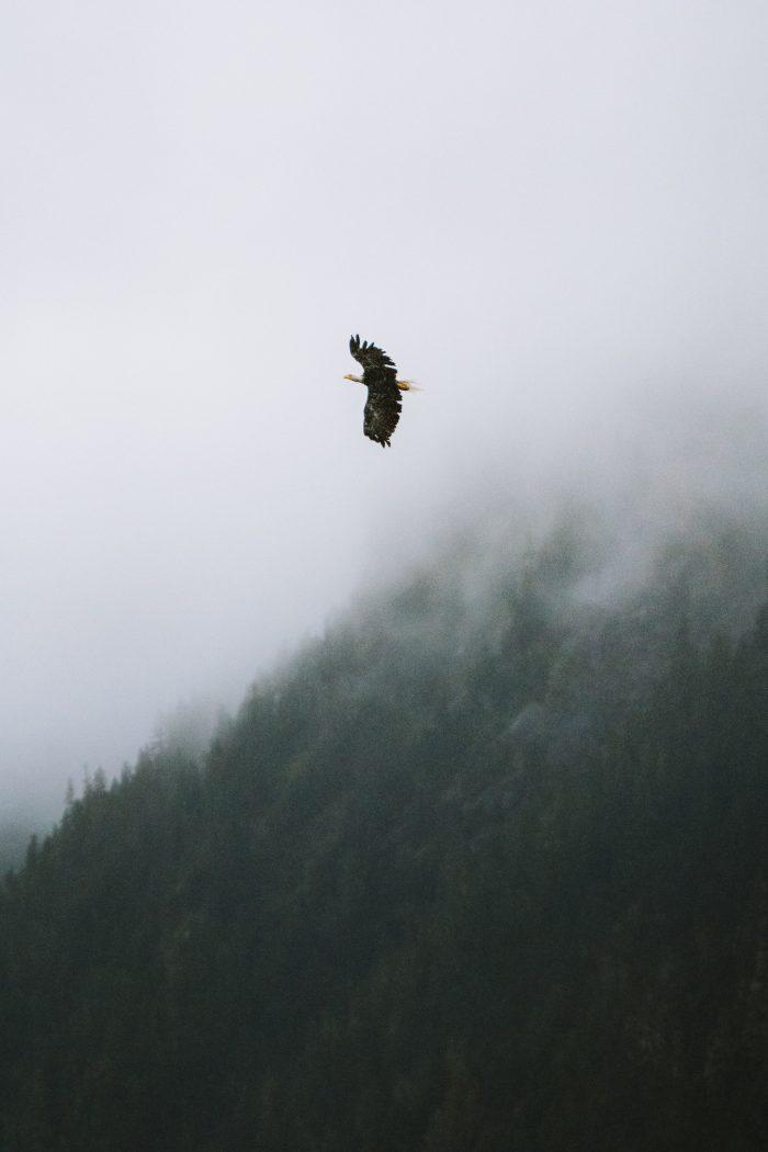 Yukon Birds
