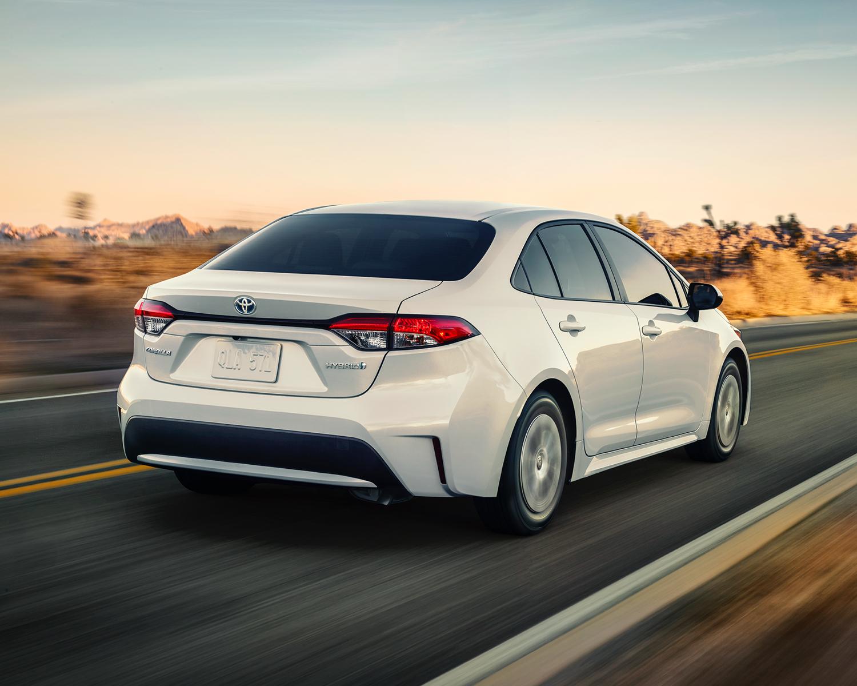 Corolle hybride montrée en Super blanc