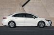 Corolle hybride montrées en Super blanc