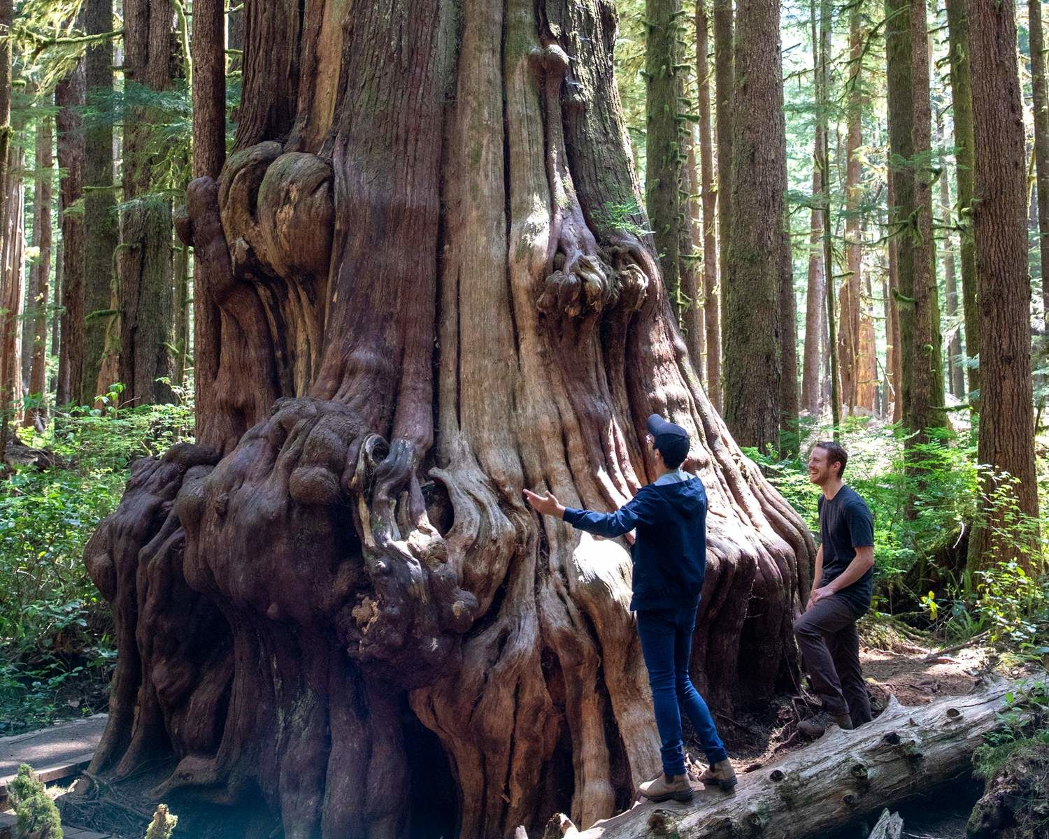 Michael et TJ Watt, fondateur de l'Ancient Forest Alliance, à Cathedral Grove (C.-B.)