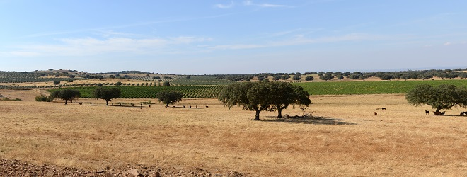 Alentejo near Elvas, the Portuguese region