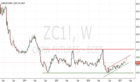 ZC1!: CBoT corn weekly