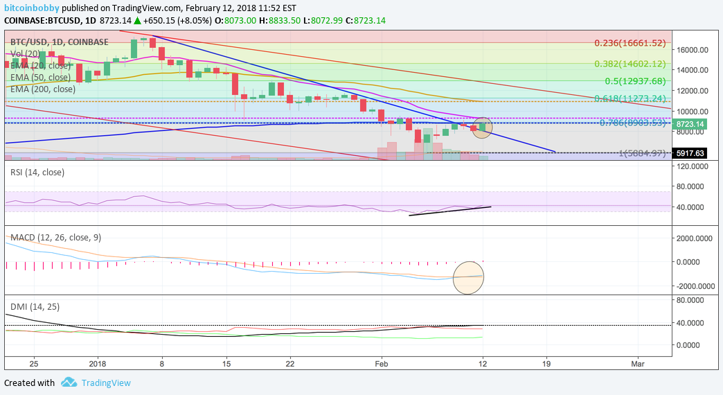BTC Market Update: Dead Cat bounce or real rally? for