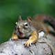 SuicidalSquirrel