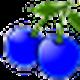 berryfarmer