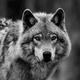 wolvesagainsttheworld