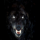 Wolfthorne