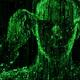 cryptodecoding