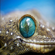 GeckoiCapital