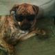 The_Blind_Dog