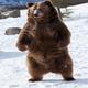 bearmaxtrading