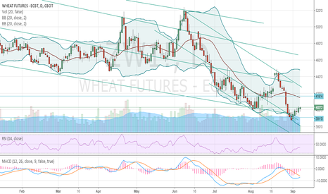 ZW1!: wheat short