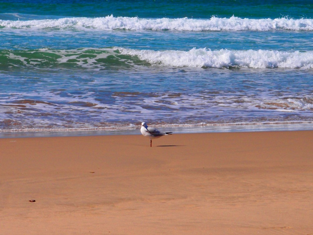 Bird enjoying clean water and sand at Mystics Beach