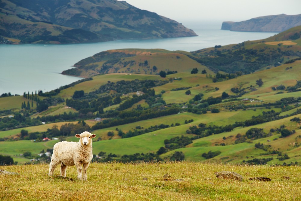 101 Crazy Fun Facts About New Zealand