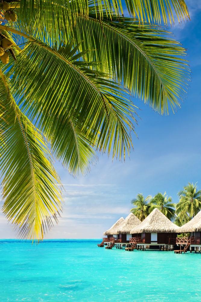 Facts about Fiji Cuisine