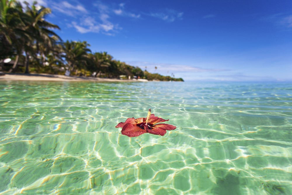 Facts about Fiji The tagimaucia