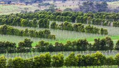 Under the Radar Wine Regions
