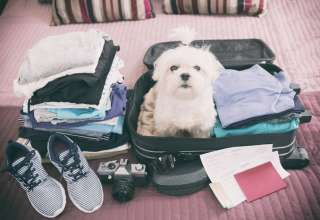Traveling with Pets Q&A with Dr Danielle Bernal