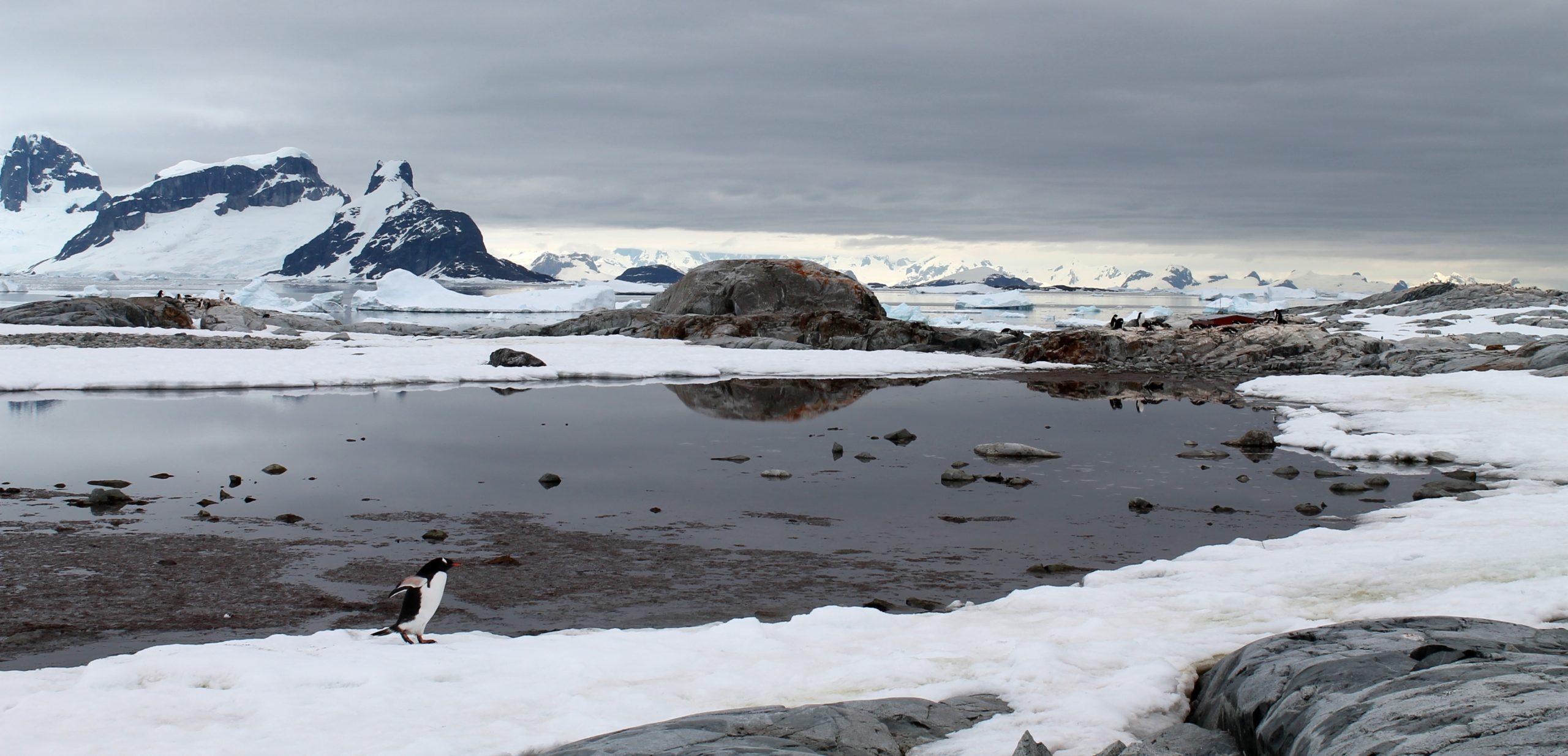 Antarctic Explorer – Day 7: Lemaire Channel, Petermann Island & Pleneau Bay