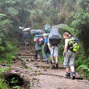 kilisa-Kilimanjaro forest