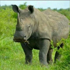 crater-rhino