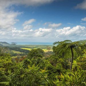 australia_queensland_cairns_daintree-rainforest