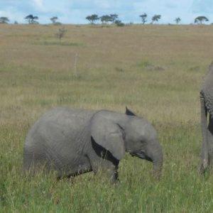 banner_tanzania_serengeti_elephant-conga-line