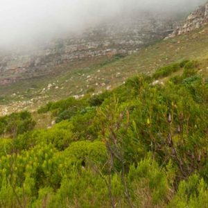 south-africa_table-mountain-hiking