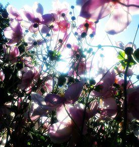 Spree  designer ethereal petals 7579 treniq 1 1545075461605