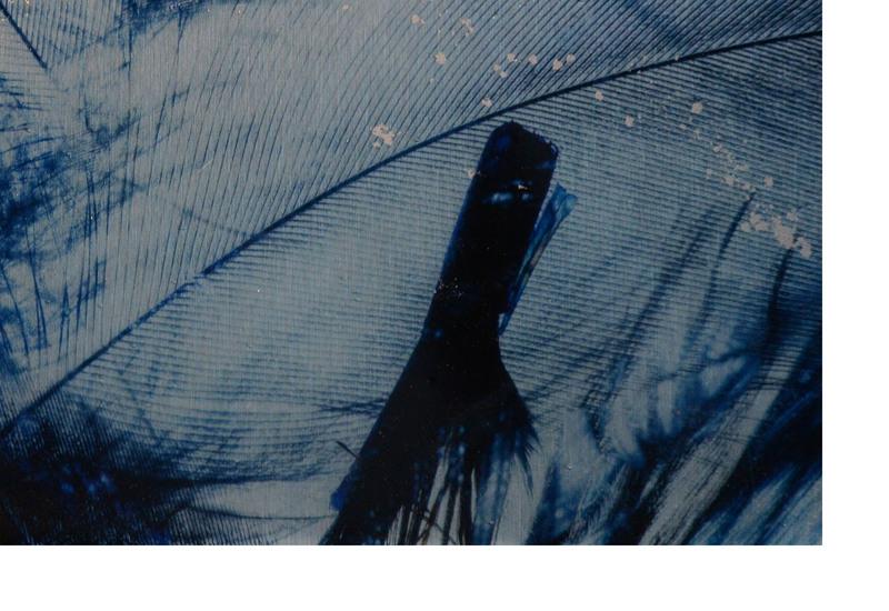 Blue bird panel studio 198 treniq 2