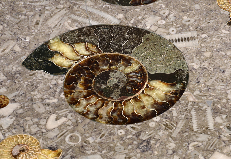 Large ammonite table hurley treniq 4