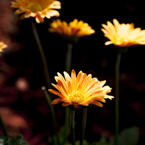 Garden-Light-Photograph_Eric-Christopher-Jackson_Treniq_0