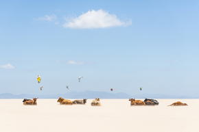 Cows-And-Kites_Andrew-Lever-Fine-Art_Treniq_0