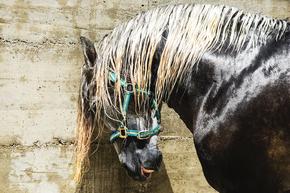 Spanish-Horse-Photograph_Andrew-Lever-Fine-Art_Treniq_0