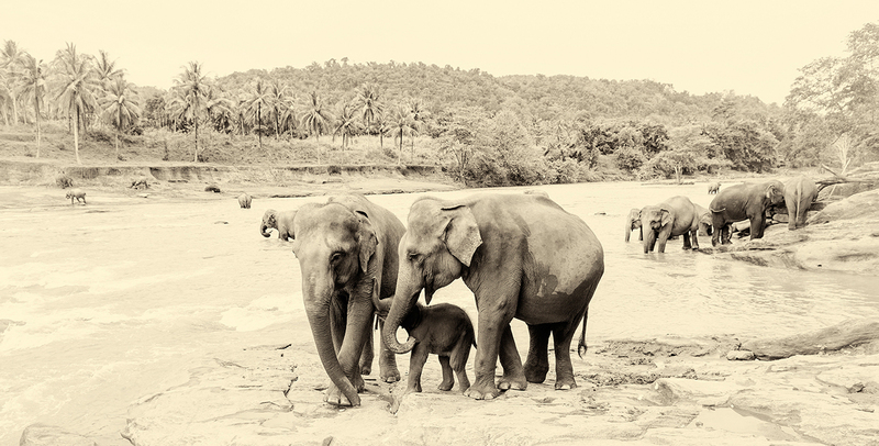River elephants 4. andrew lever fine art treniq 1 1503308805924