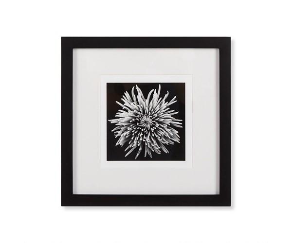 Black blossom d kelly hoppen treniq 1 1504260179453