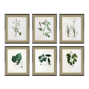 Eichholtz-Botanica-Prints-(Set-Of-6)_Eichholtz-By-Oroa_Treniq_0