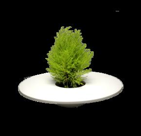 Hat-Planter_&Blanc_Treniq_0