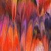Tropical blaze ii alexandra romano art treniq 1 1513886410489