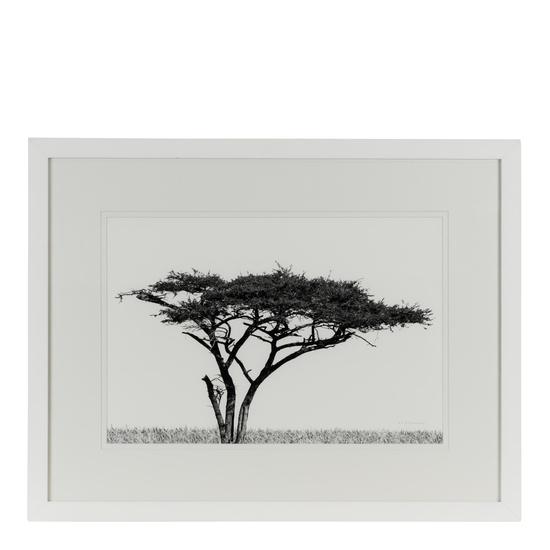 Acacia landscape jess latimer treniq 1 1515765521201