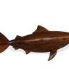 Bull shark avana africa treniq 1 1516699634743