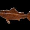 Bull shark avana africa treniq 1 1516699634741