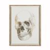 Gold skeleton skull  sonder living treniq 1 1527686127850